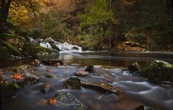 Picture autumn, forest, river, stones, England, Devon, England, River Erme, Devon