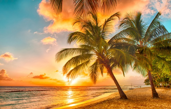 Picture sand, sea, beach, sunset, tropics, palm trees, shore, beach, sea, ocean, sunset, paradise, palms, tropical