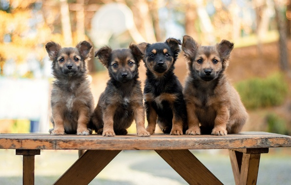 Photo wallpaper dogs, puppies, bench