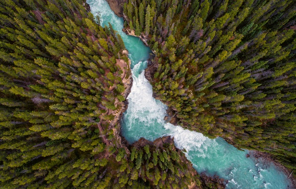 Picture forest, nature, river, the view from the top