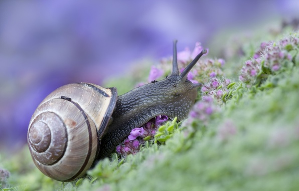 Picture grass, snail, sink