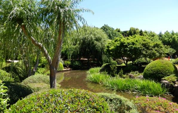 Picture grass, trees, pond, garden, Australia, the bushes, Japenese Garden, Toowoomba