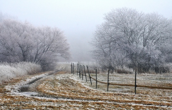 Picture field, landscape, fog, the fence, morning