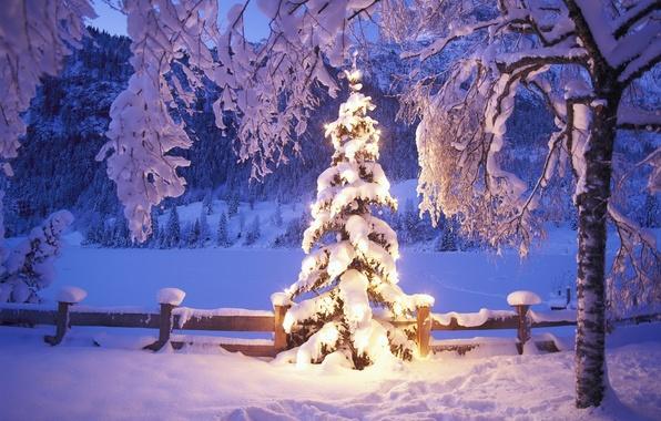 Picture winter, snow, lights, tree