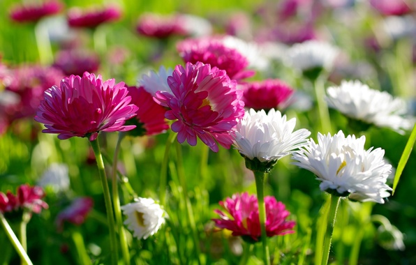 Picture summer, flowers, nature, beauty, spring, meadow