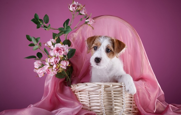 Picture basket, roses, necklace, puppy, the Sealyham Terrier