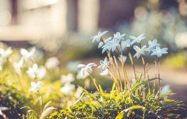 Picture grass, flowers, glare, petals, blur, bokeh, Blue