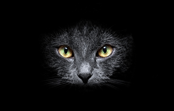 Picture BACKGROUND, LOOK, GREY, BLACK, FACE, CAT, MUSTACHE, EYES