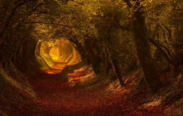 Picture road, autumn, light, trees, nature, trail