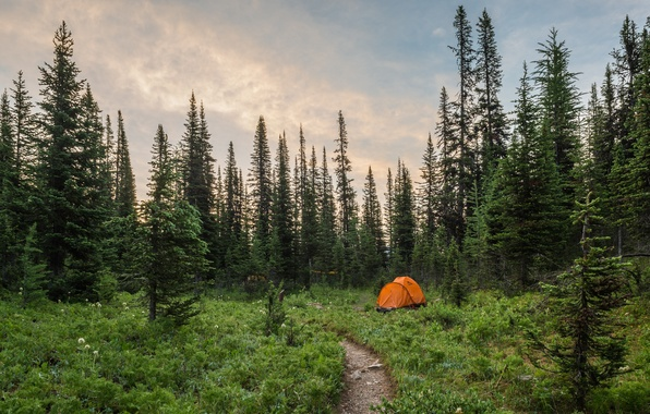 Picture forest, Nature, tent