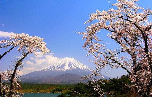 Picture trees, lake, mountain, spring, Japan, Sakura, Fuji