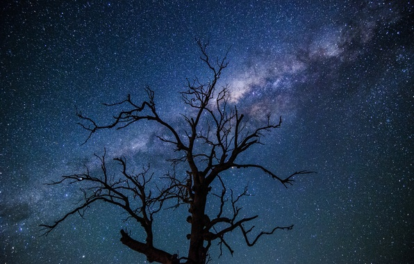 Picture space, stars, night, tree, the milky way