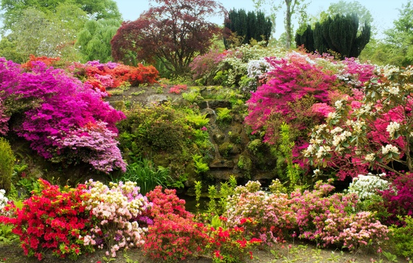 Picture trees, flowers, stones, moss, garden, UK, the bushes, Azalea, Bodnant Gardens Wales