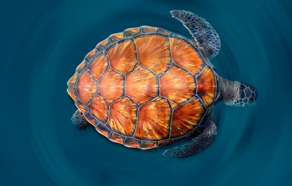 Picture sea, paint, shell, the green sea turtle