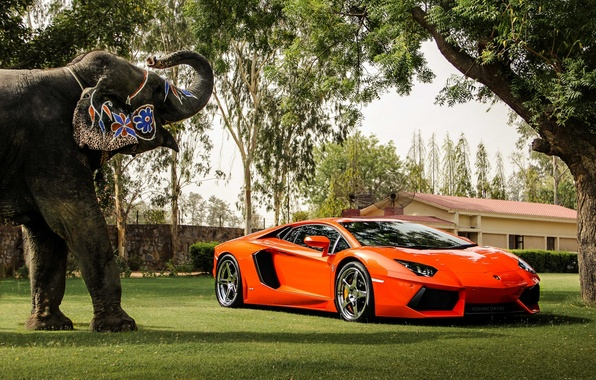 Picture trees, orange, reflection, the building, elephant, the fence, lamborghini, front view, orange, aventador, lp700-4, Lamborghini, …