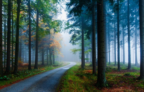 Picture road, autumn, trees, nature, fog, trunks, Forest, ate, needles