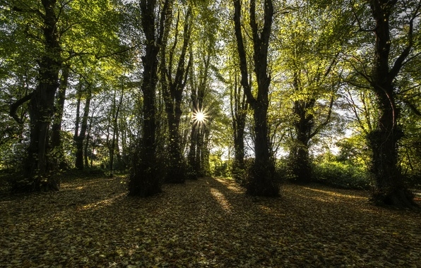 Picture autumn, the sun, rays, County Londonderry, beech forest, Northern Ireland