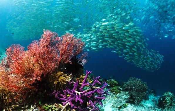 Picture sea, fish, corals, cant, Underwater world