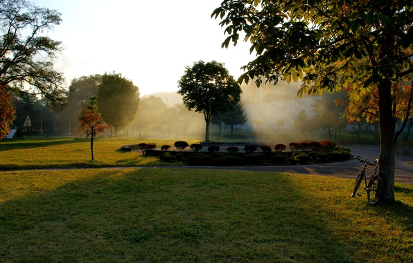 Picture autumn, grass, leaves, the sun, rays, trees, bike, Park, tree, dawn, foliage, grass, flowerbed, bike, ...
