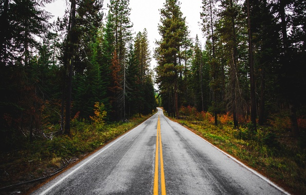 Picture forest, trees, nature, Road