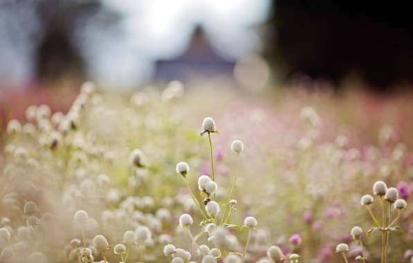 Picture macro, light, nature, clover