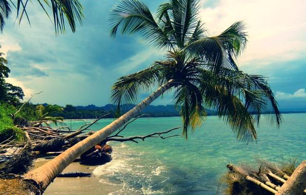 Picture beach, landscape, nature, Palma, palm trees, the ocean, shore, coast, island, beach, Lazur