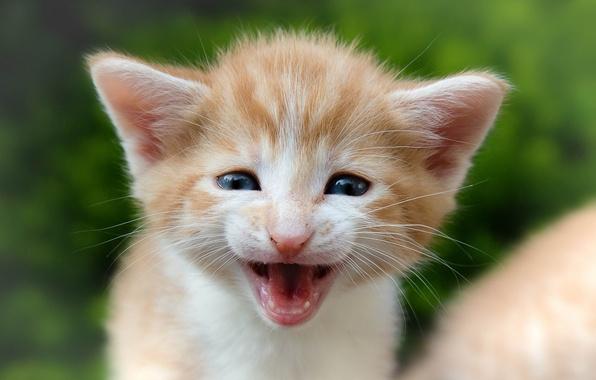 Picture baby, muzzle, kitty, pisklya