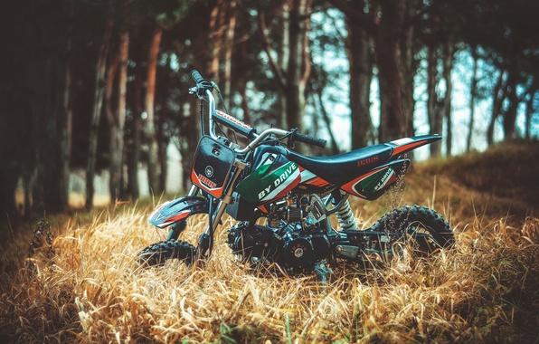 Picture view, Moto, IRBIS