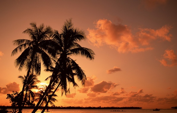 Picture sunset, vacation, Palm trees