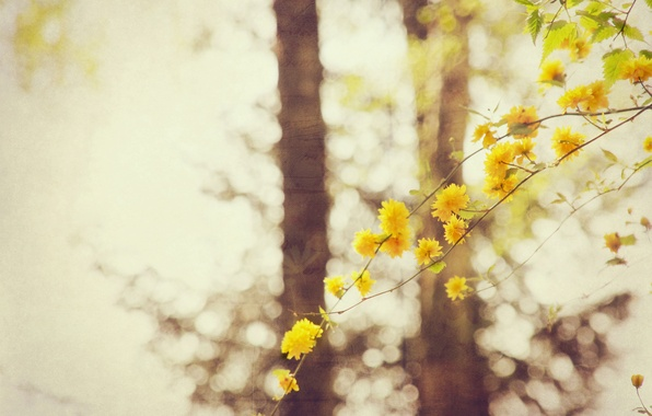 Photo wallpaper bokeh, branch, flowers, trees