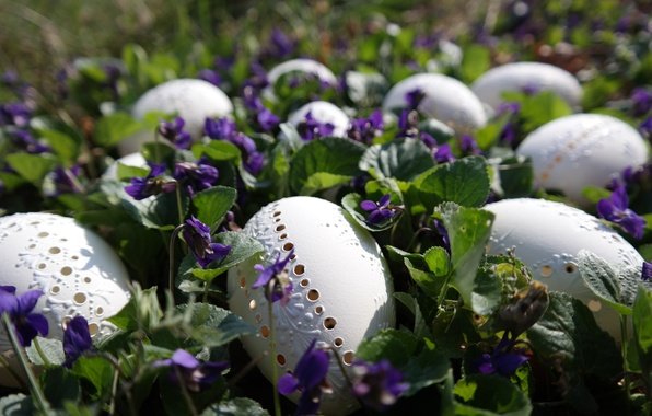 Picture flowers, nature, holiday, eggs, spring, Easter, violet