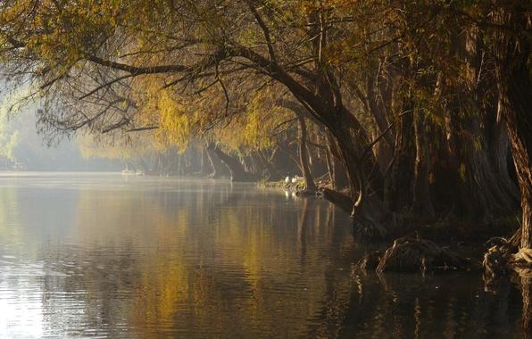 Picture fog, lake, Park