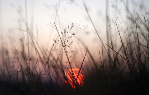 Picture grass, the sun, macro, sunset, bokeh