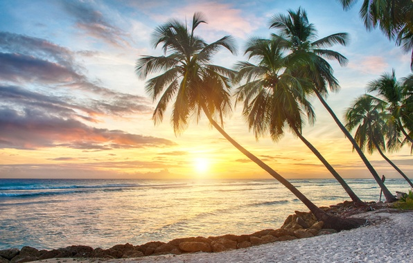 Picture sand, sea, beach, sunset, tropics, palm trees, shore, beach, sea, sunset, paradise, palms, tropical