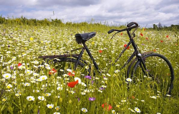 Picture GRASS, HORIZON, The SKY, FIELD, CLOUDS, BIKE, FLOWERS, PLAIN, CHAMOMILE, GREEN, MAKI, RUSTY