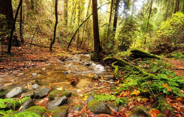 Picture greens, forest, trees, stream, stones, foliage