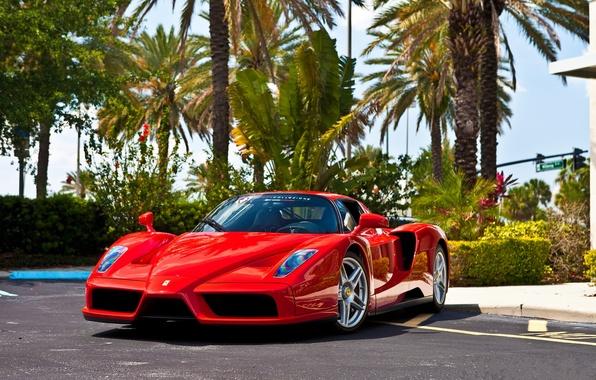 Picture asphalt, trees, red, reflection, red, ferrari, Ferrari, front view, enzo, Enzo