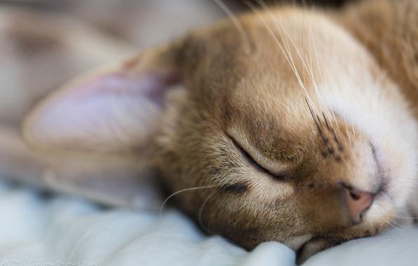 Picture cat, macro, animal, stay, sleeping