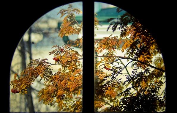 Picture Window, Orange, Rowan