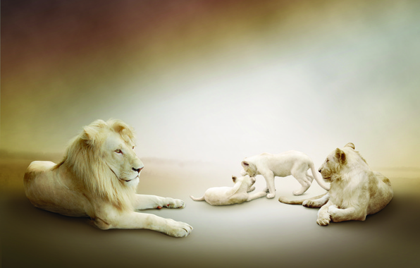 Picture Leo, white, lions, the cubs, lioness, play, family