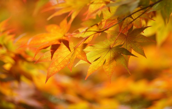 Picture autumn, leaves, macro, mood, yellow