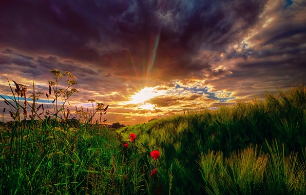 Picture field, the sky, grass, the sun, clouds, rays, sunset, flowers, meadow