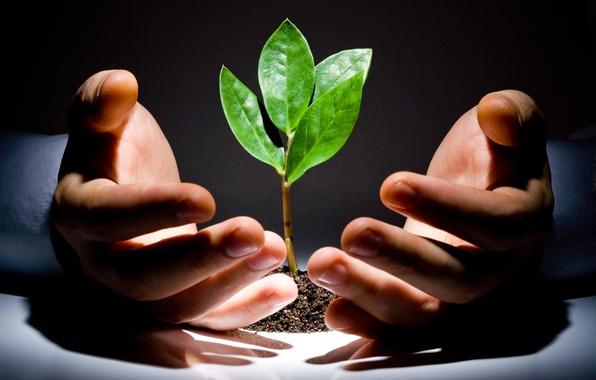 Picture green, light, leaves, floor, hands, hope