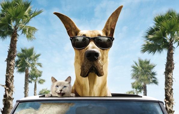 Picture machine, cat, trees, smile, palm trees, the wind, dog, glasses, dog, Marmaduke, Marmaduke