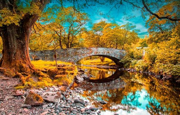 Picture autumn, forest, the sky, clouds, trees, bridge, Park, river, arch