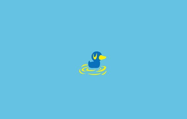 Picture water, bird, duck, duck