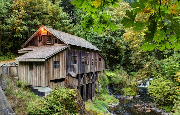 Picture forest, summer, stream, mill