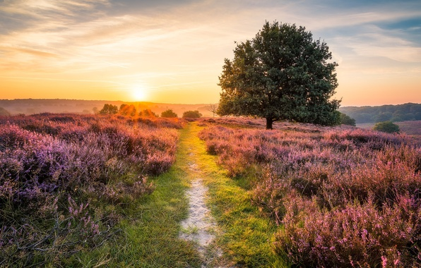 Picture road, field, summer, light, morning