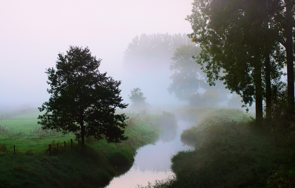 Picture trees, nature, fog, river, morning