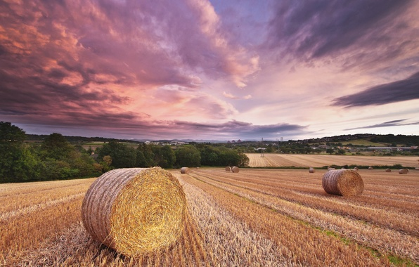 Picture field, summer, the sky, clouds, the evening, hay, straw, rolls